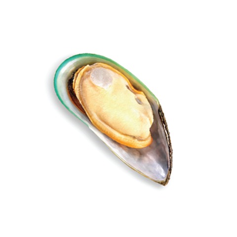 Mussel large